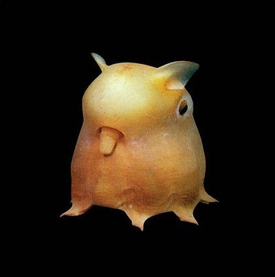 Weird Sea Creatures | NerdGirlBlogging
